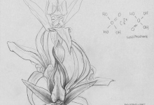 Study For an Ecological Portrait of the Tarengo Leek Orchid